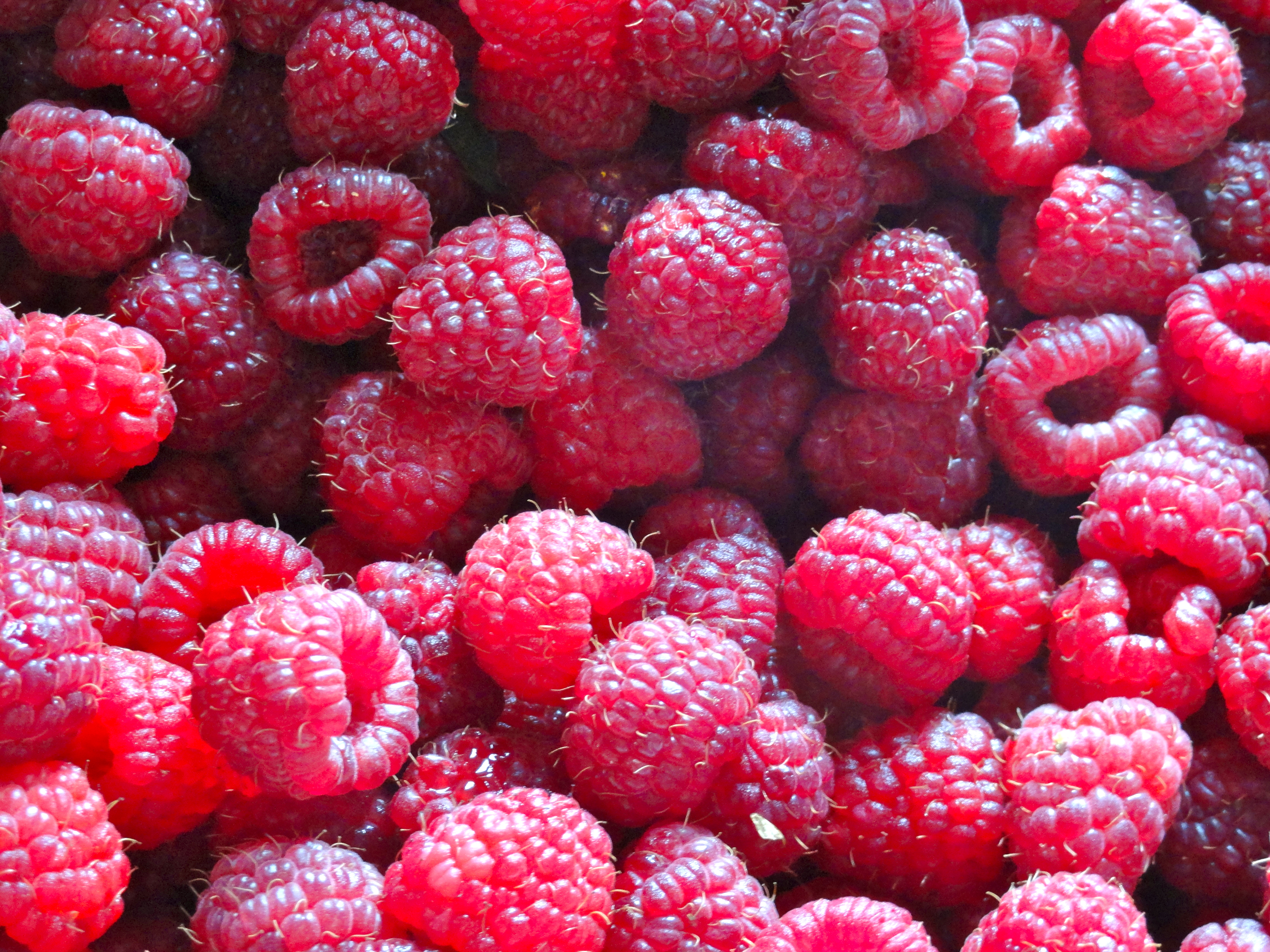 Our friends, the Bishops, grow incredible pick-your-own raspberries (and blueberries and thornless blackberries) at Yellow Hill Farm in Biglerville, PA. They generously donated a couple of gallons of berries for camp.