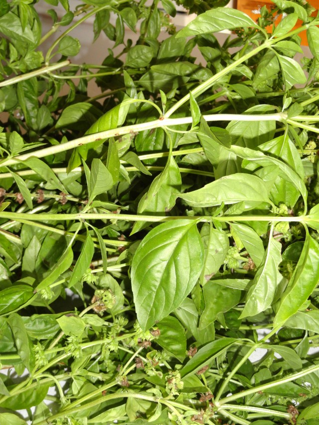 Basil Pesto for the Freezer